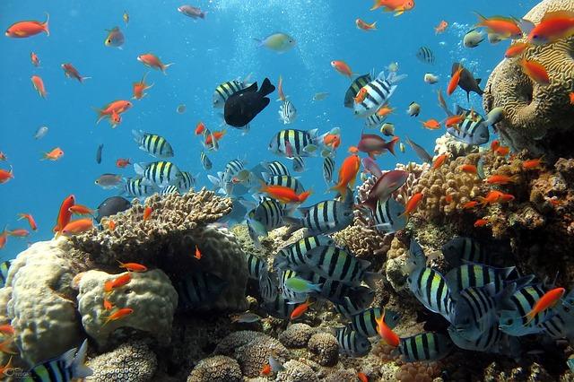 korálový útes a rybičky