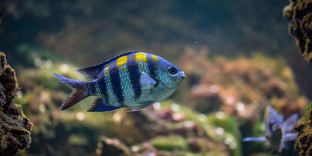 rybka v akvárku